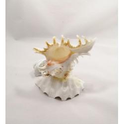 Deniz Kabuğu Lamba
