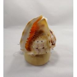 Deniz Kabuğu Masa Lambası
